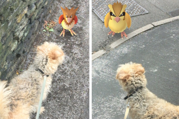 Pokemon Go is helping shelter dogs get some much needed love